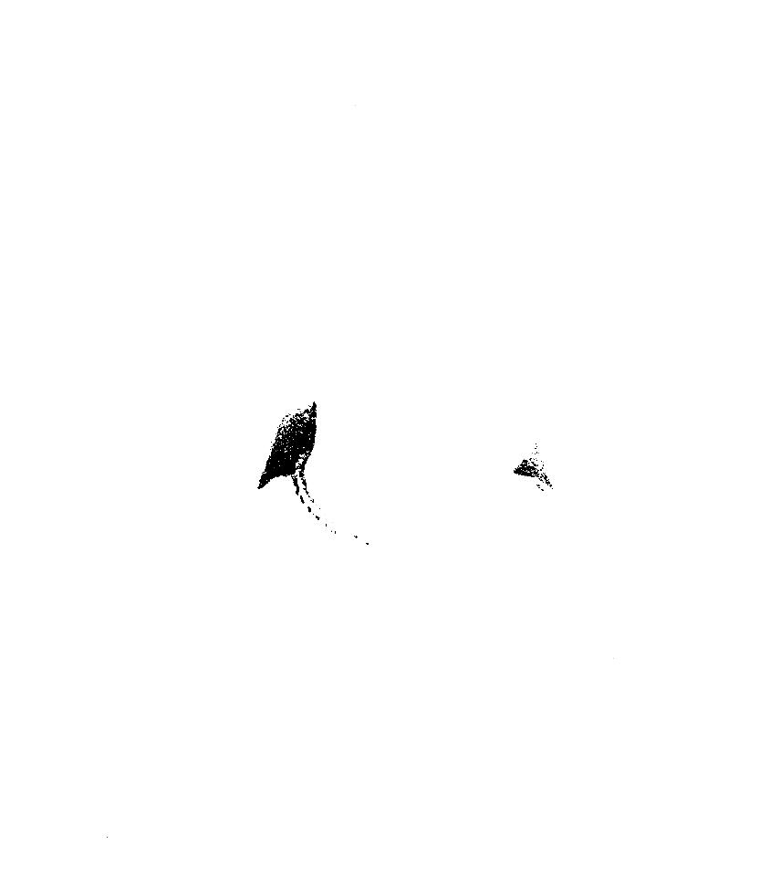 http://beatlesssound.de/files/gimgs/6_portraitjos-diegel-photoc-volker-muth-1.png